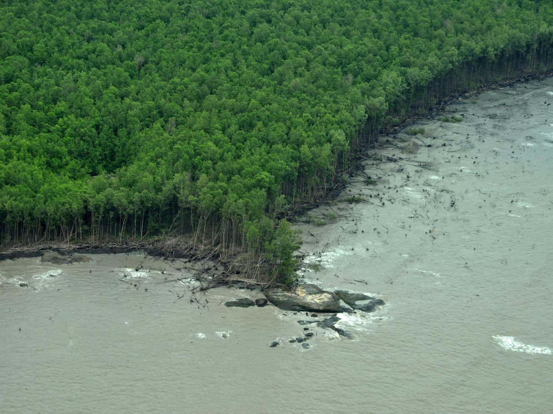is_mangroves_guyane_vue_aerienne_proisy.jpg